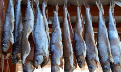 A row of fish hanging to dry