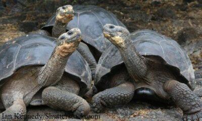 3 tortoises