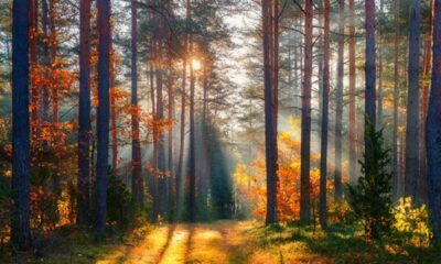 Sunlight filtering through trees in a forest