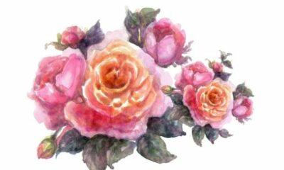 An illustration of vintage roses