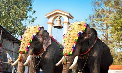 2 indian elephants wearing ceremonial head-dress
