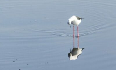 a sebird standing in water looking at its refection