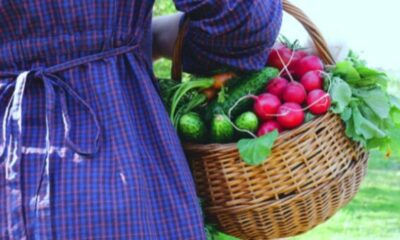 close-up of woman's waist in a checked blue dress holding a traditional basket with vegetables to her side