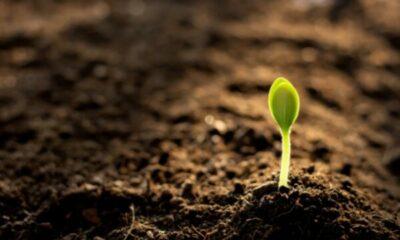 a small shoot poking through soil